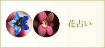 ワイルドフラワー  花占い